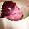 http://thumbnails40.imagebam.com/11945/ac431c119444373.jpg